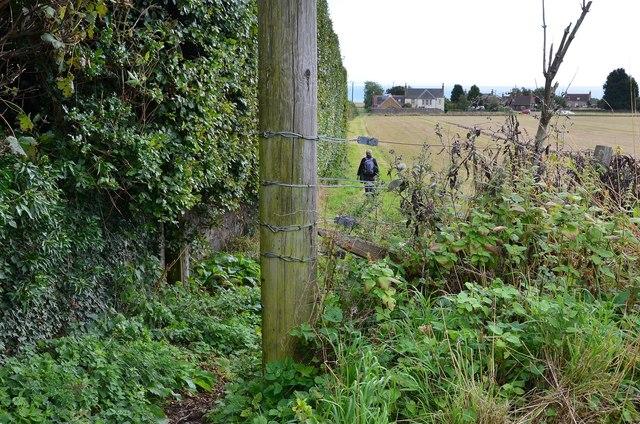 Field edge path to Drumeldrie