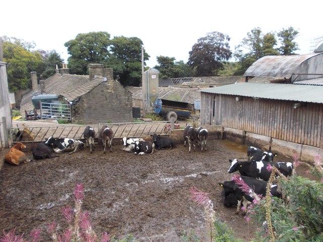 At Bagden Hall Farm