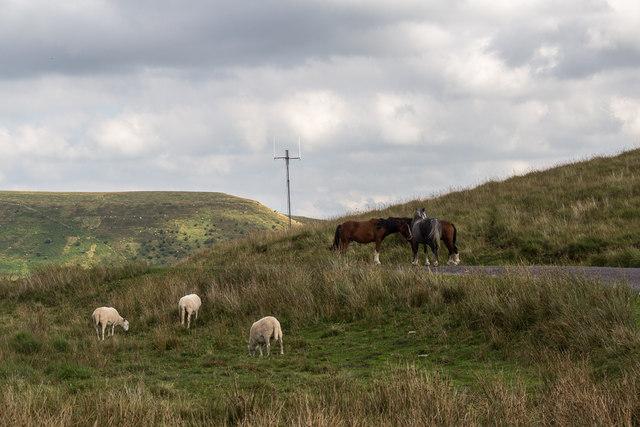 Sheep near Blalen-y-Bryn, Brecon Beacons, Wales