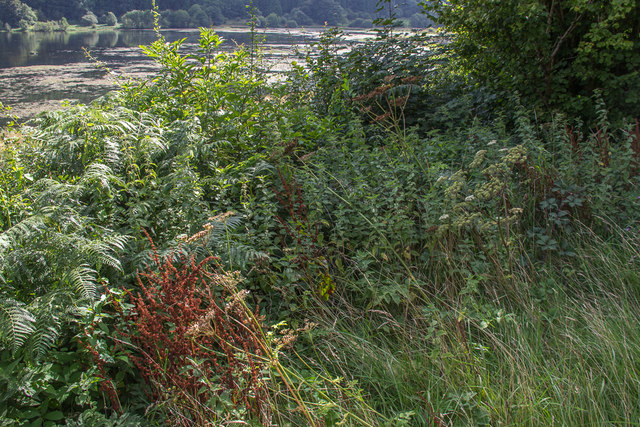 Vegetation by Talybont Reservoir, Brecon Beacons, Wales