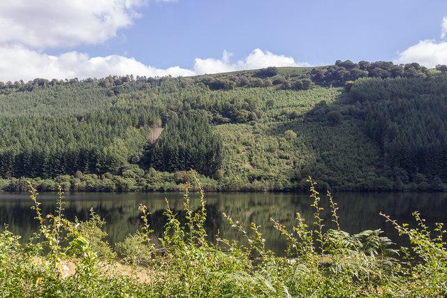 Vegetation by Talybont Reservoir, Brecon Beacons, Wales