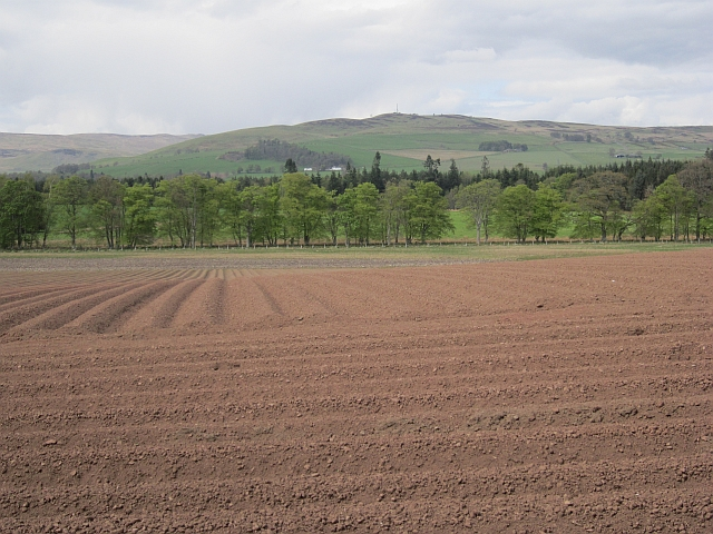 Potato field, Dollerie