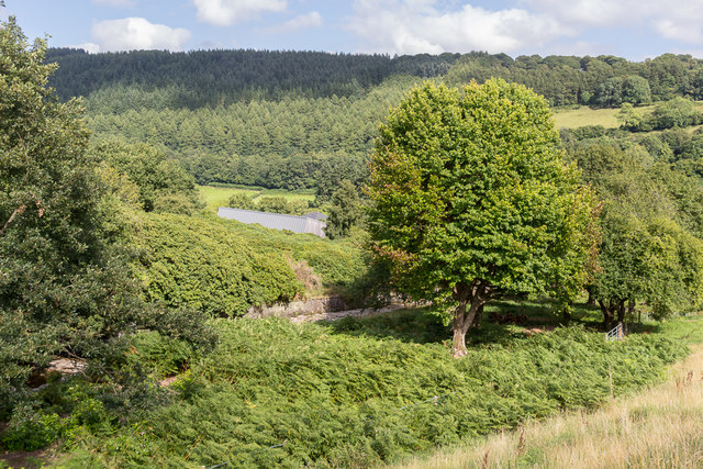 Countryside below Dam, Talybont Reservoir, Brecon Beacons, Wales