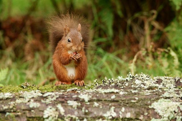 One Happy Squirrel