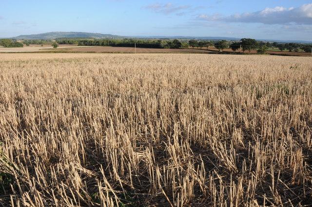 Stubble field at Kinnerley