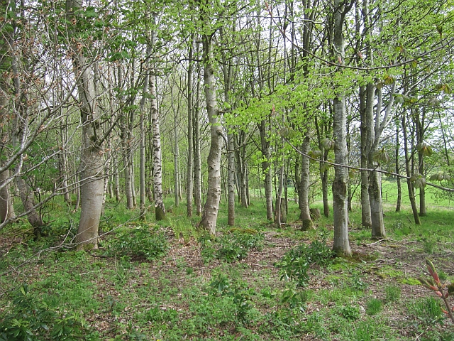 Woodland, Dollerie