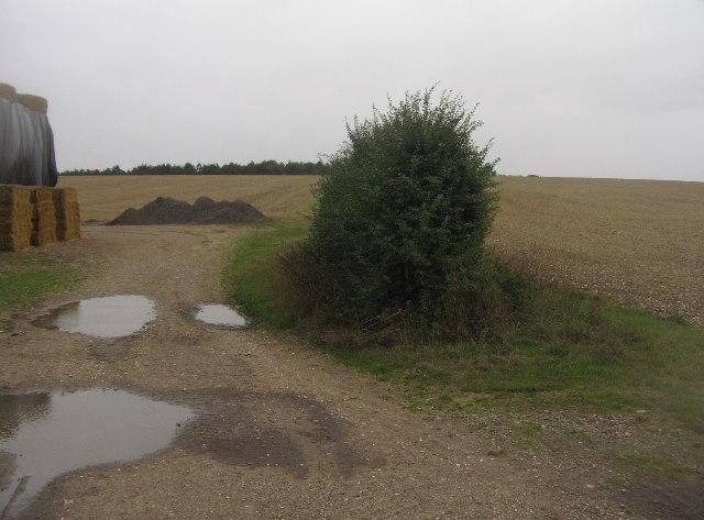 Field boundary - Summer Down