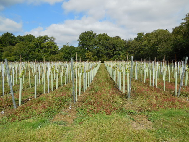 Bolney Vineyard