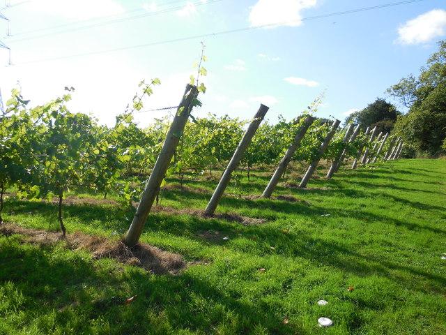 Bolney Vineyard