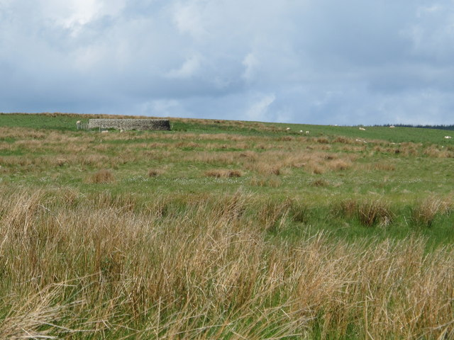 Rough pastures east of a sheepfold north of Dudlees