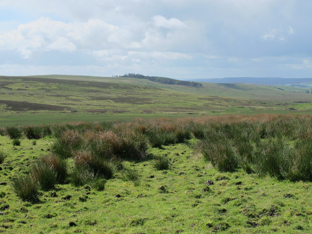 The headwaters of Durtrees Burn