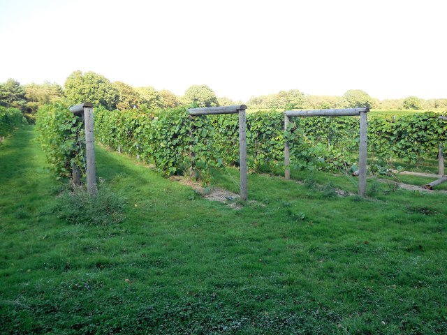 Vines on Bookers Farm