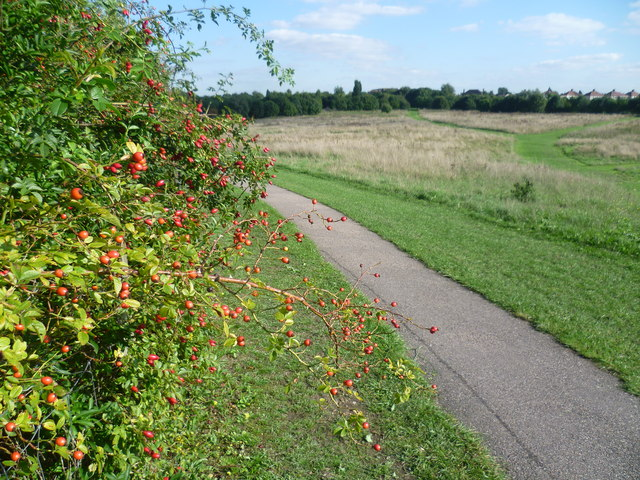 Autumn fruits on East Wickham Open Space