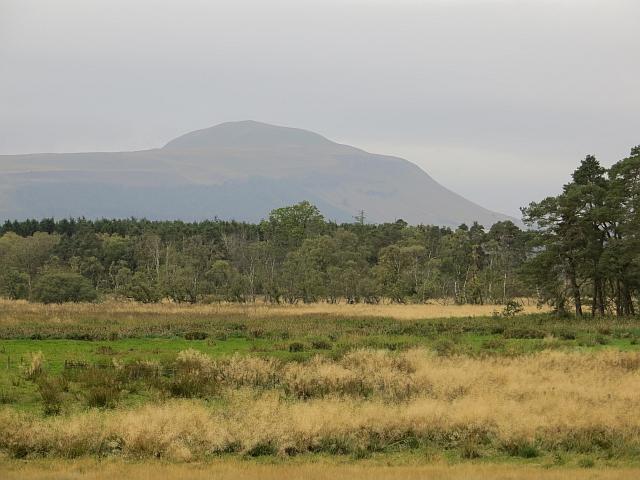 Wetland, Rossie