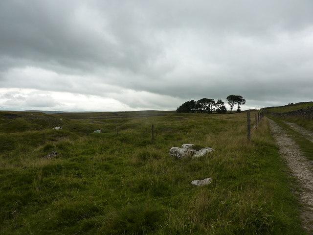 Track on Grassington Moor, near Yarnbury