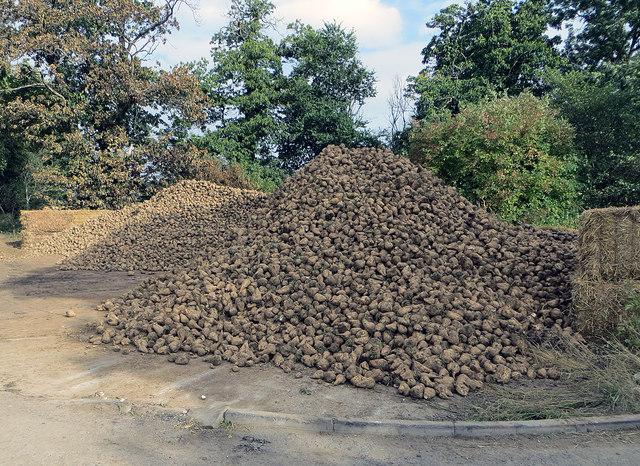 Barrow Vale - Roadside Beet Stack