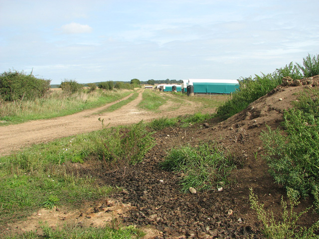 Farm track to pig huts, Saxthorpe