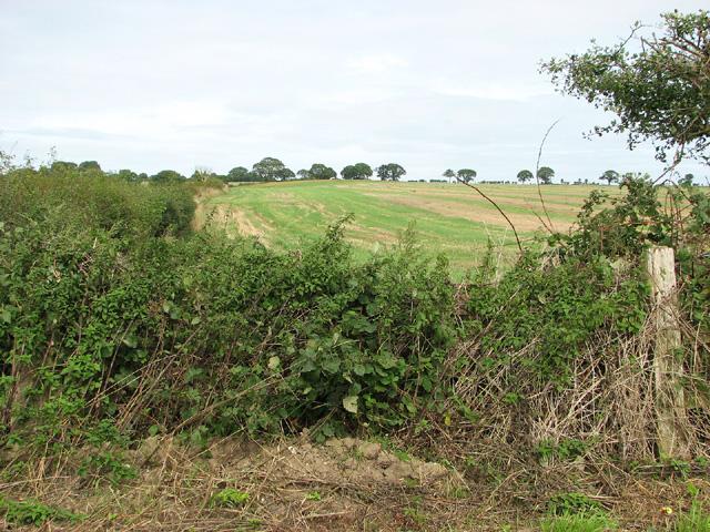 Fields south of Edgefield Street