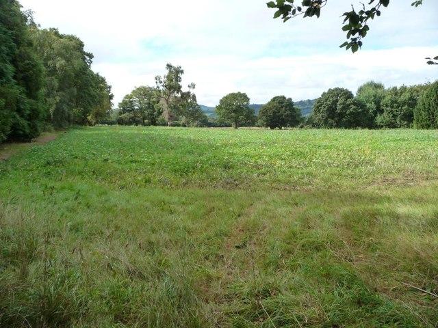 Arable crop, south-west of Llan Lane