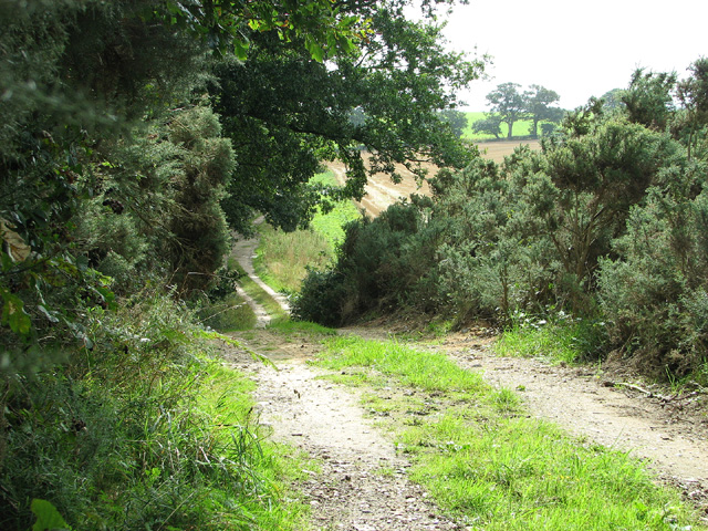 Farm track skirting Barningham Green Plantation