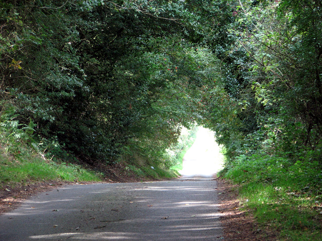Lane past Barningham Green Plantation