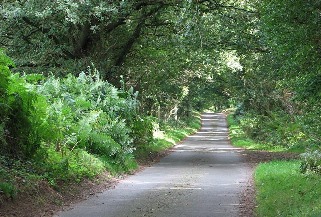 Through Barningham Green Plantation