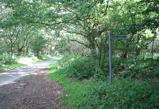 Bridleway through Barningham Green Plantation