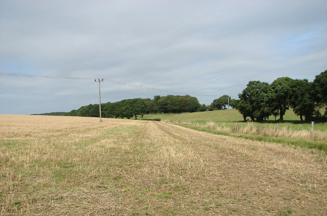 Fields by Richmond Cottage, Barningham Green
