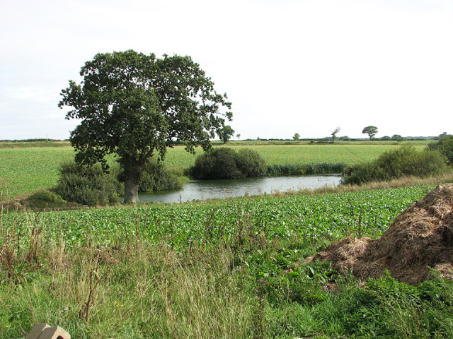 Pond by Barningham Green Farm