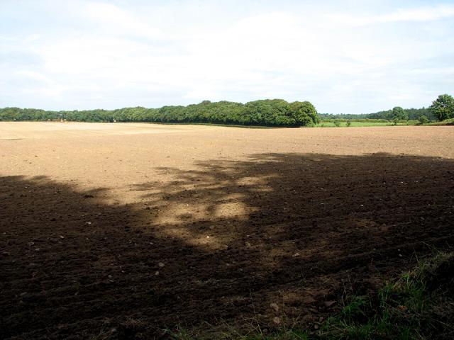 Fields by Wood Farm