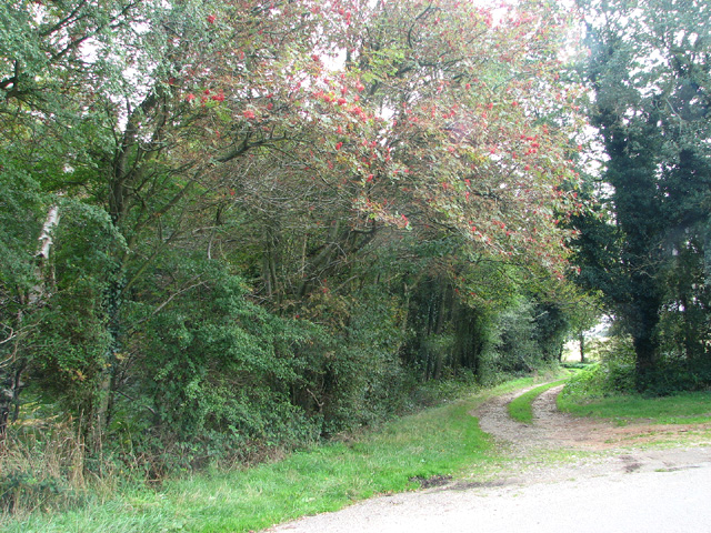 Path to Barningham Green