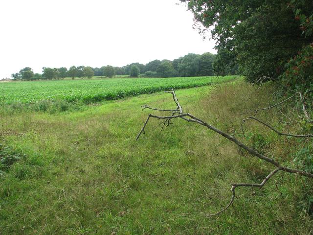Fields west of Plumstead Green
