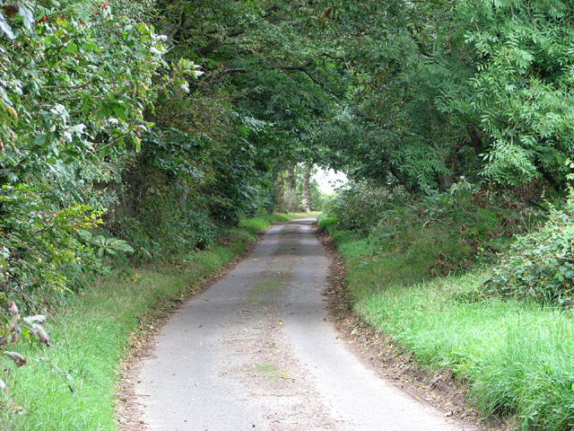 Lane past Fir Plantation