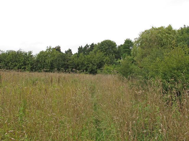 Path through meadow, Crowsheath Community Woodland, Downham