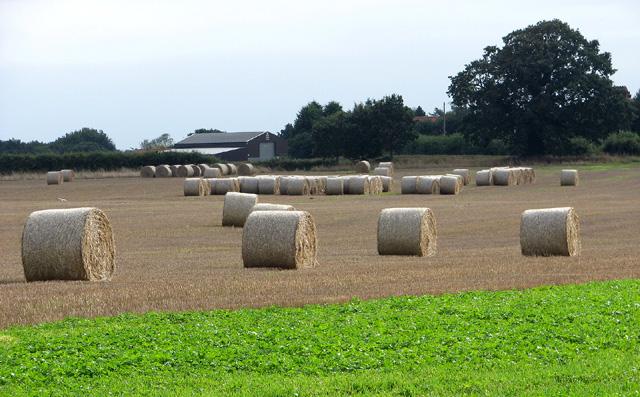 Baled straw, Edgefield