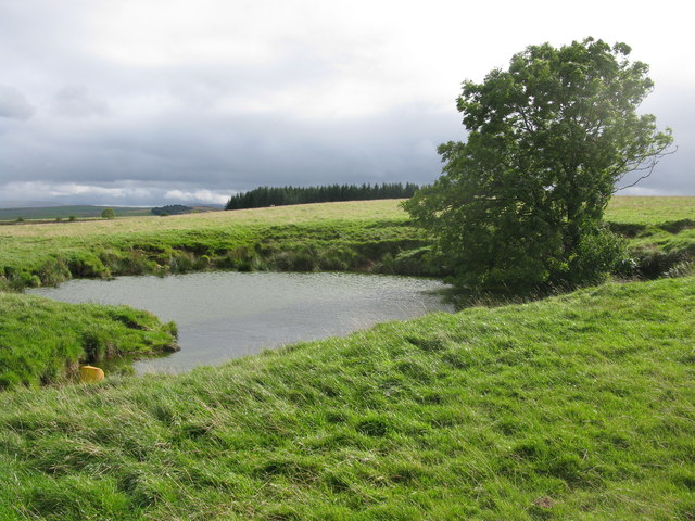 Small Pond and Tree, Maulds Meaburn Moor