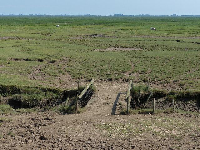 Cattle bridge across a tidal creek
