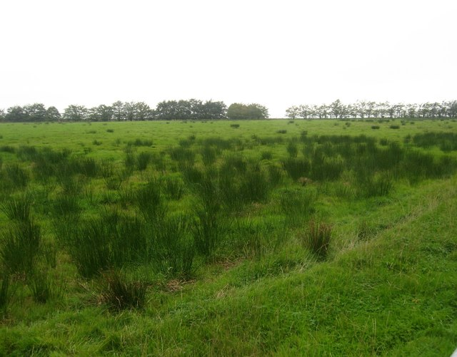 Marsh grazing lands between Hughsrigg and Broadmeadows