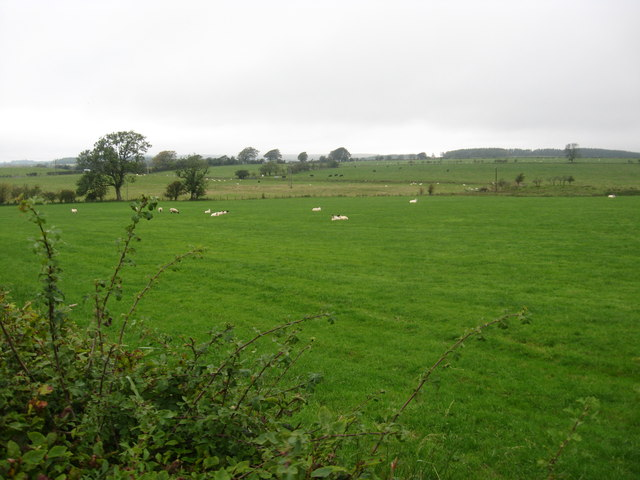 Sheep grazing in the fields at Beckhall