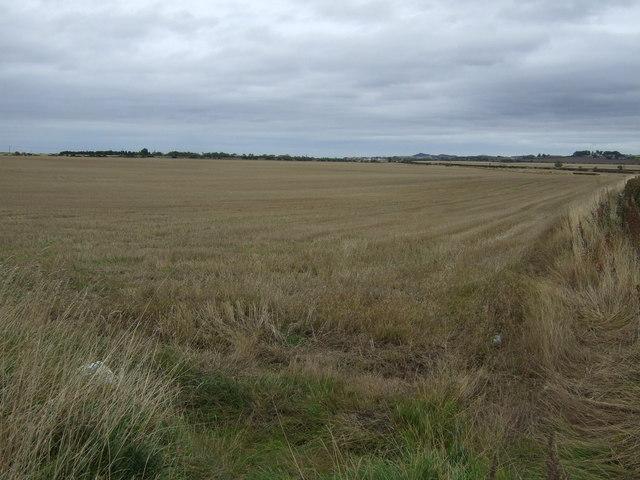 Farmland, Buxley