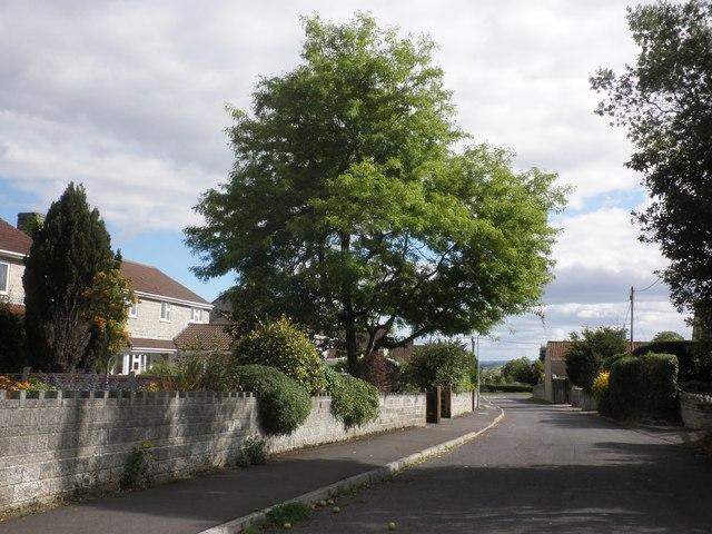 Heale Lane