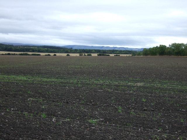 Farmland south of the A199