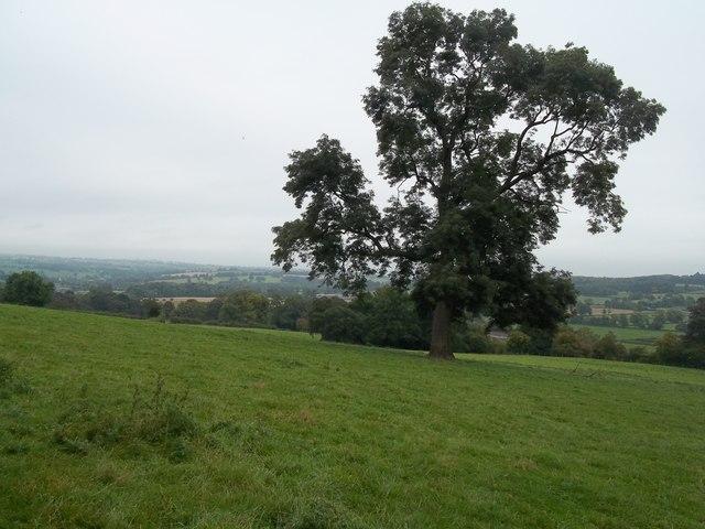 The Limestone Way near Rocester