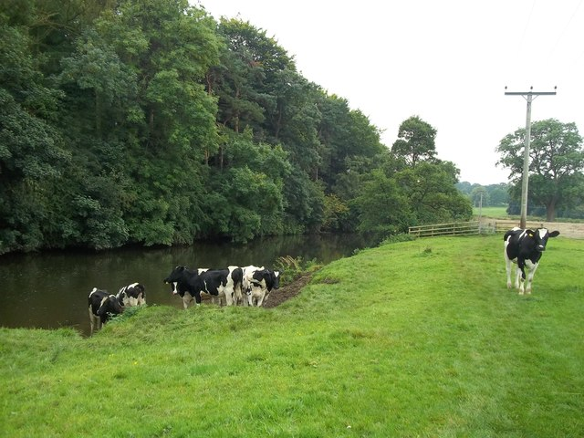Livestock by the River Dove