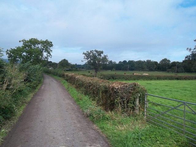 Meadow Lane near Roston