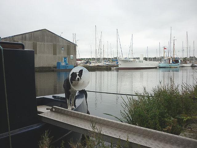 Dog on barge, Glasson Basin