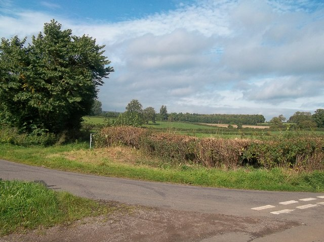 View Towards Woodland near Norbury