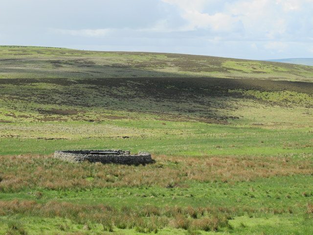 Sheepfold north of Durtrees Burn (2)