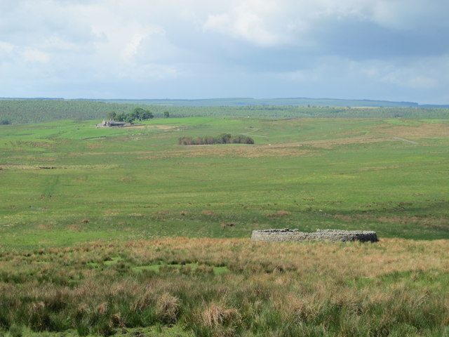 Sheepfold north of Durtrees Burn (3)