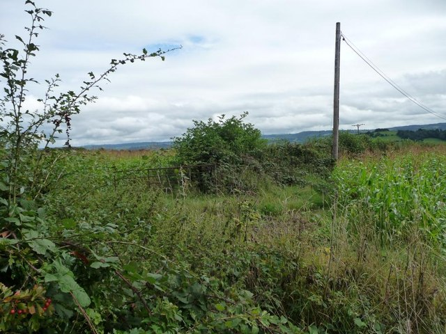 Public footpath to Coed Canol and Coed Mawr